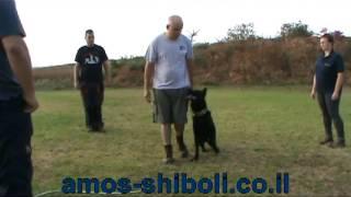 אילוף כלבים - רגלי תחרותי