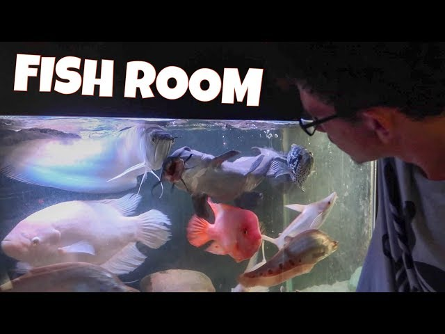 HUGE EXOTIC FISH ROOM TOUR!! *FEEDING*