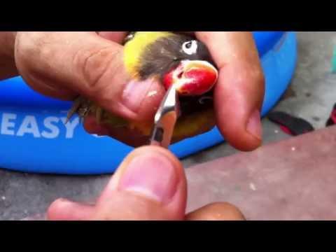 Pagsusuri ng mga bawal na gamot sa paggamot ng kuko halamang-singaw