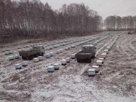 Промышленное пчеловодство в Сибири Пасека Матюшкиных