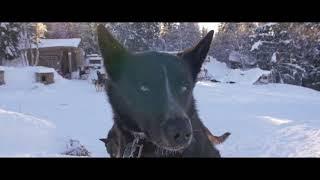 Beito Husky tours AS, Norway