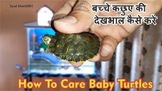How To care baby Yellowbelly Slider Turtle  कछुए के बच्चे की देखभाल कैसे करें