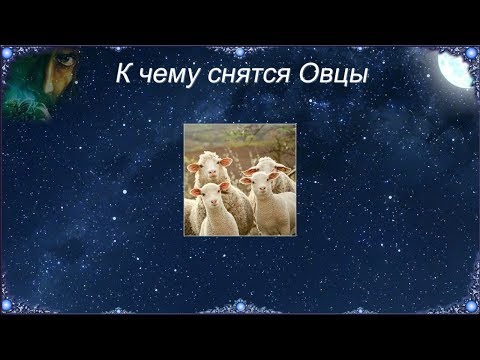 К чему снятся Овцы (Сонник)