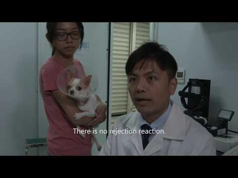 Discovery報導: 亞果生醫眼角膜產品成功執行首例犬隻眼角膜移代表圖