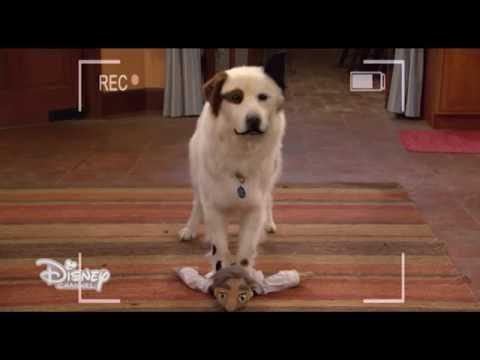 dogtheblog's Video 157611110309 VQFc8NqbPRM