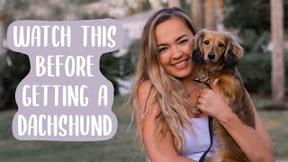 Owning A Dachshund: THE PROS AND CONS