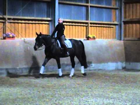 Patogen koń za koniem