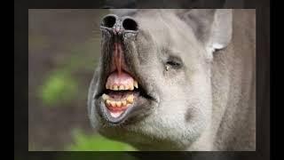 Amazing and Funny Animal #25