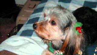 Patti Page  -  HOW MUCH IS THAT DOGGIE IN THE WINDOW .wmv