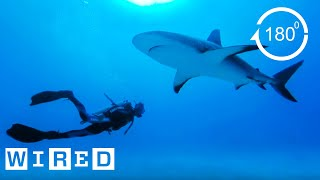 How Researchers Keep Humans Safe From Shark Attacks (180°)| Damage Control | WIRED
