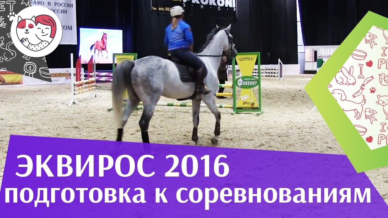 Подготовка молодой конкурной лошади к соревнованиям Ч 3 ЭКВИРОС 2016 на ilikepet