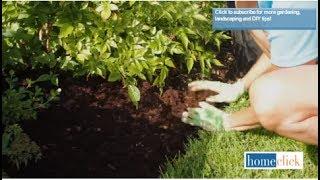 Choosing the Best Mulch for your Garden