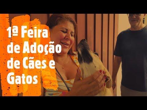 Feira de adoção de cães e gatos em Araçariguama