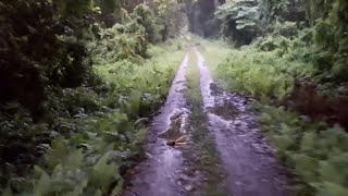 Amazing Dooars Car Safari Dense Forests Of Chilapata - Gorumara - Buxa - Jayanti