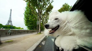 Why Dogs Stick Their Heads Out Of Car Windows | Pets: Wild At Heart | BBC Earth