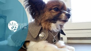 Dog Coats / Simple & Stylish