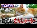 【海外の反応】衝撃!日本の城主になった猫「さんじゅーろー」が海外ネットで話題に!海外「日本でしかあり得ない!」