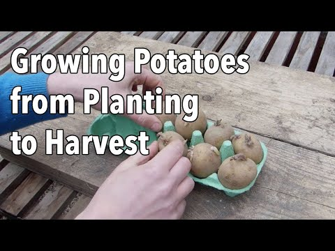 , title : 'Growing Potatoes from Planting to Harvest