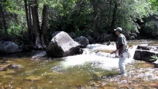 How to Fly Fish Colorado's Freestone Streams