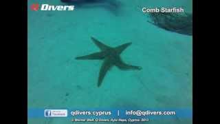 Q Divers - Comb Starfish