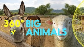 Meet the Big Animals Compilation | 360 Degrees for Kids