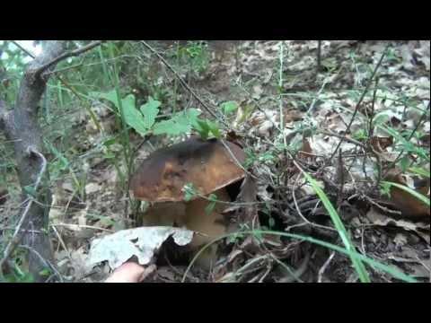 Acido di salicylic da un fungo di gambe