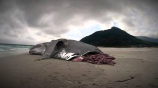 Megalodon boat attack south africa 2020