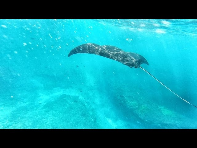 Snorkeling with Manta Ray - Nusa Lembongan