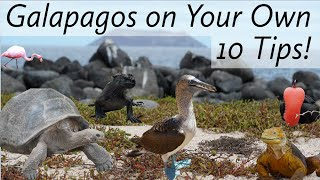 Galapagos on Your Own: Top 10 Tips!