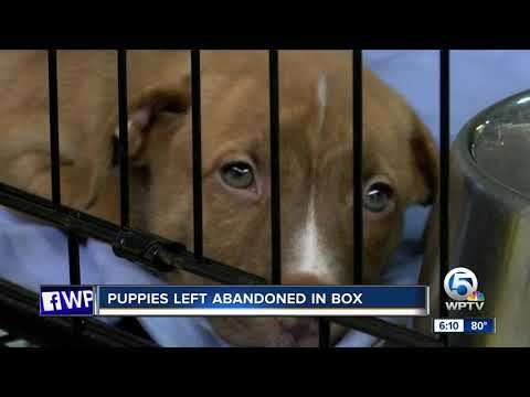 Puppies left abandoned in box now for adoption