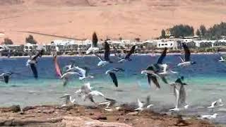 preview picture of video 'Egipt Dahab, hotel Hilton'