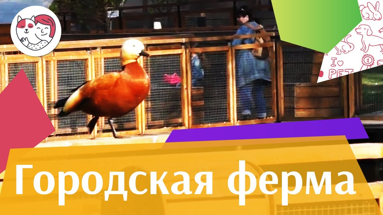"Проект ""Городская ферма"" на ilikepet"