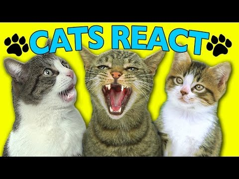 CATS REACT TO VIRAL VIDEOS