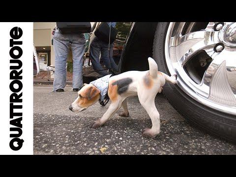 Proteggere le gomme dalla pipì dei cani