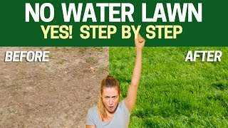 Grow a LAWN without WATER - Step by Step with Results WATERLESS LAWN