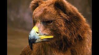 Как бы выглядели медведи, если бы у них был клюв