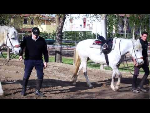 Comprare lattivatore di cavallo in Donetsk