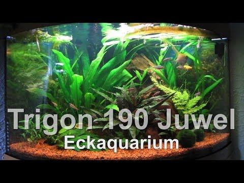 Juwel // Trigon 190 // Eckaquarium // Süßwasser / Tank