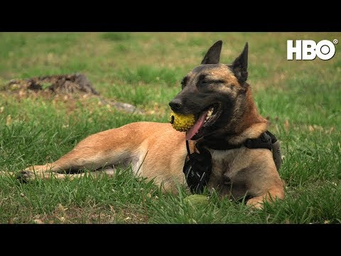 War Dog: A Soldier's Best Friend (2017) | Official Trailer | HBO