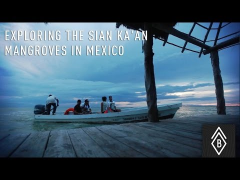 Exploring The Sian Ka'an Mangroves In Mexico