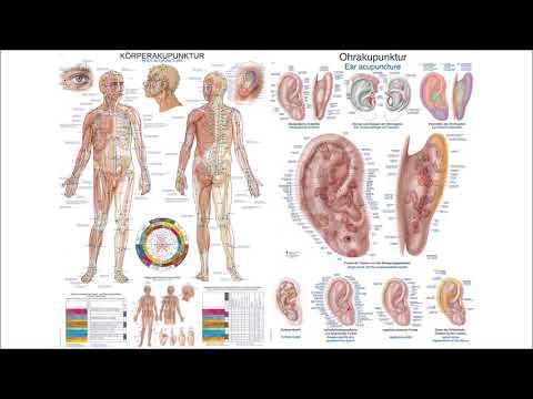 Anatomische Lehrtafeln Erler-Zimmer