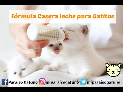 Fórmula casera de leche para Gatitos (3 ingredientes)