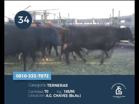Lote Hembras - A G Chaves