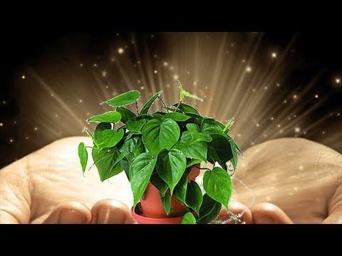 Волшебное удобрение для растений! Настой из крапивы – лучшая подкормка!