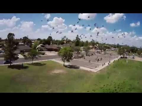 Geprc Cinepro 4k - FPV Park Slow Motion Flocking Birds
