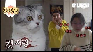 """고양이만 나오는데 무서운 영상 l """"The Cat-juring"""" Starring Only Cats But Still Very Scary"""
