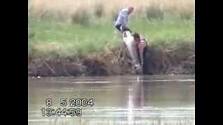 Река сырдарья в узбекистане рыбалка на сырдарье
