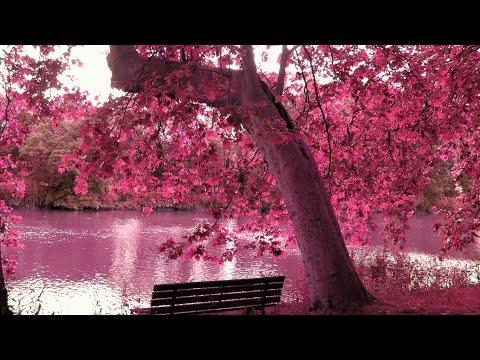 Удивительная красота природы.Фильм Натальи Егоровой .