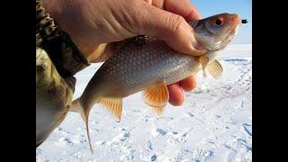 Отчеты о рыбалке кудиновский карьер 2020