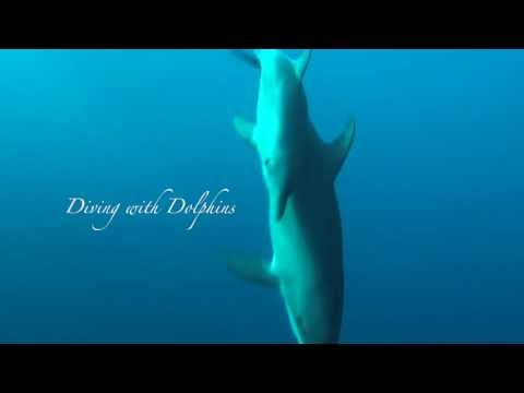 Diving with Dolphins, Marsa Nakari,Ägypten